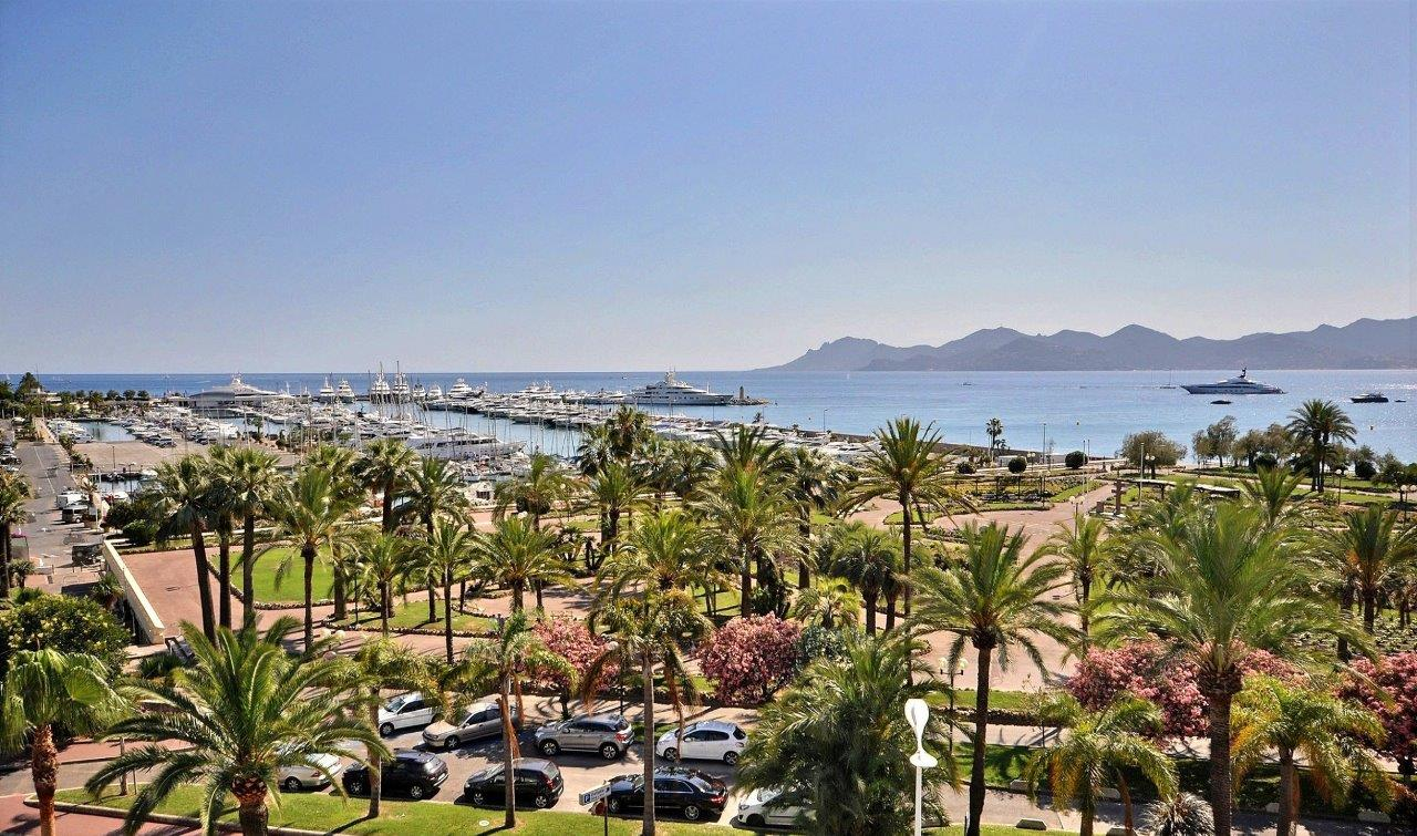 cannes-palm trees