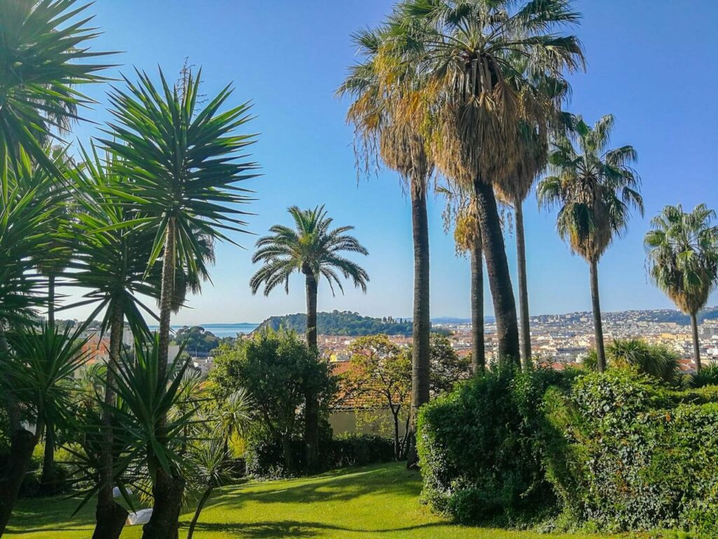 property in south france with palm trees and bright green grass