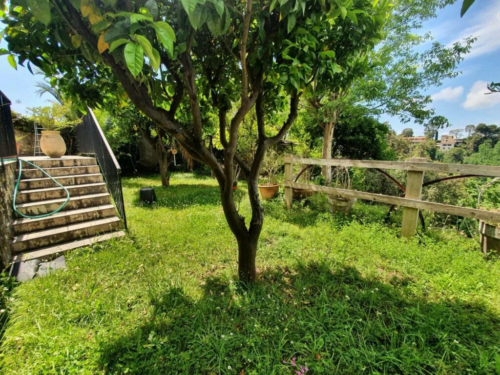 bright green grass win backyard with small tree in center with steps up towards villa