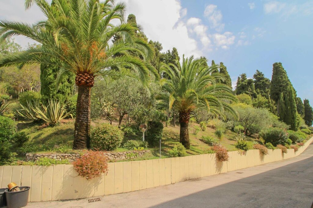 large open garden with palm trees of complex in menton