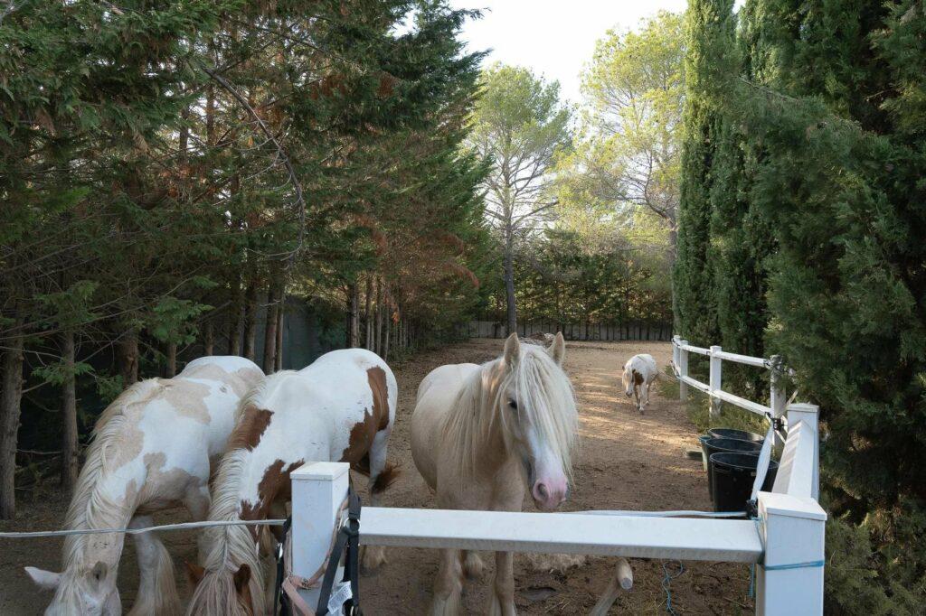 horse stable of villa in draguignan