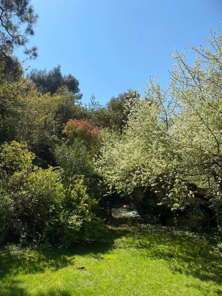 garden filled with trees in south france
